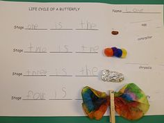 Life cycle of a butterfly project