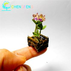 Aliexpress.com : Buy 100 Pcs / Pack Free Shipping Mini Bonsai Orchid Seeds Mixed Orchid Flower Varieties Plants For Garden Decoration Pot Rare Seeds from Reliable plant bell pepper seeds suppliers on Happy Plants SEED
