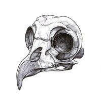This is very unique tattoos designs Bird Skull Tattoo Design Animal Skull Tattoos, Skeleton Tattoos, Animal Skulls, Tribal Tattoos, Animal Skull Drawing, Owl Skeleton, Crow Skull, Skull Art, Kunst Tattoos