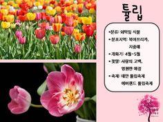 봄 활동자료 봄에 피는 꽃 PPT : 네이버 블로그 21st, Blog, Blogging