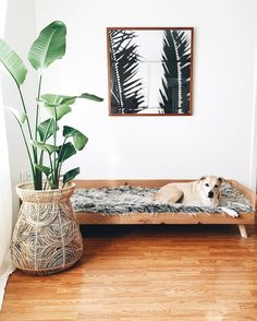 Green Body + Green Home on Instagram: indoor plants black white photography mid century dog bed