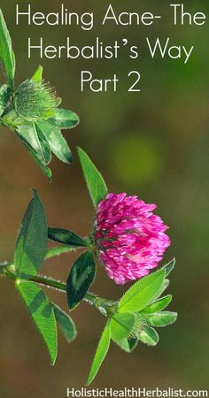 Healing Acne naturally- The Herbalist's Way Part 2