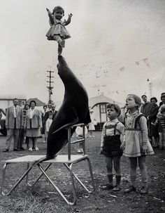 Circus seal playing with doll