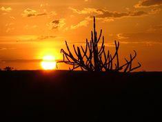 A caatinga é formada por três estratos: o arbóreo, com árvores de 8 a 12 metros de altura; o arbustivo, com vegetação de 2 a 5 metros; e o herbáceo, abaixo de 2 metros. Entre as espécies mais comuns estão a amburana, o umbuzeiro e o mandacaru. Algumas dessas plantas podem produzir cera, fibra, óleo vegetal e, principalmente, frutas.