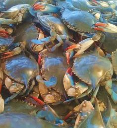 Blue Crabs   I have caught many of these guys and especially enjoy a soft shell sandwich.
