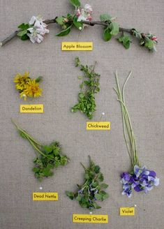 edible spring flowers, via designsponge. Click on link for a more comprehensive list