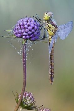 Вы , только взгляните , какие красивые стрекозы . All Nature, Amazing Nature, Science Nature, Nature Images, Beautiful Creatures, Animals Beautiful, Cute Animals, Beautiful Bugs, Beautiful Butterflies