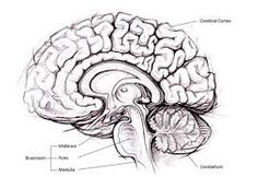 Evolution Select for Better Human Brains? Did Evolution Select for Better Human Brains?Did Evolution Select for Better Human Brains? Medical Science, Science News, Medical News, Human Brain Diagram, Evolution, Neural Connections, Create Meaning, Work Life Balance Tips, Psychology Studies
