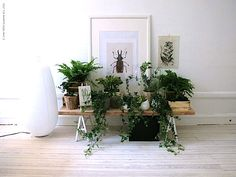 I love plants and am always trying to figure out the best ways to display them in my home. Love this one.