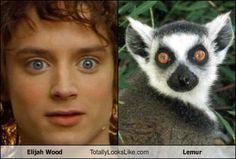 Elijah Wood  --->  Lemur