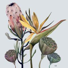 Plant Illustration, Watercolor Illustration, Watercolor Paintings, Botanical Drawings, Botanical Art, Protea Art, Mural Wall Art, Art Graphique, Graphic