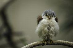 Cute little bird Pretty Birds, Love Birds, Beautiful Birds, Baby Animals, Cute Animals, Cat Dog, Tier Fotos, Mundo Animal, Little Birds