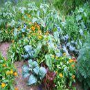 Las tareas del huerto en Julio | #Huerto urbano - Huerto ecológico ecoagricultor.com