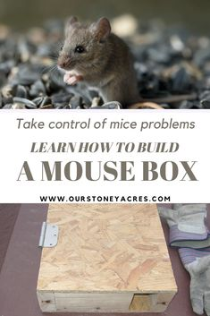 The Magical Mouse Box is a simple solution we have been using for years to help control the mice population around our chicken coop and compost bins. Organic Gardening, Gardening Tips, Amigurumi For Beginners, Grow Your Own Food, Grow Food, Backyard Vegetable Gardens, Country Lifestyle, Square Foot Gardening, Urban Homesteading