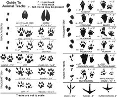 animal tracks identifyer sheet.  Fun Outdoor Activities During the Winter…