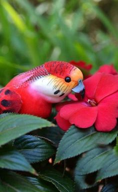 Find and save ideas about Colorful birds, Pretty birds, Beautiful birds and Tropical birds. Pretty Birds, Beautiful Birds, Beautiful World, Animals Beautiful, Cute Animals, Funny Animals, Tropical Birds, Exotic Birds, Colorful Birds