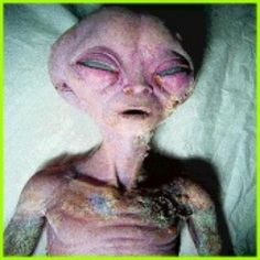 A collection of real alien pictures and real UFO photos collected from around the world. Alien Pictures, Alien Photos, Aliens And Ufos, Ancient Aliens, Do Aliens Exist, Bizarre News, Grey Alien, Alien Spaceship, Alien Creatures