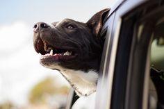 Welche Möglichkeiten es gibt den Hund ordnungsgerecht im Auto zu sichern. Hier erhalten Sie einen Überblick welcher Hundegurt, welche Aluminiumbox und Trenngitter im Kofferraum empfehlenswert sind #hund #dog #auto #reise #urlaub #sicherheit