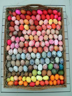 Martha's egg hunt.