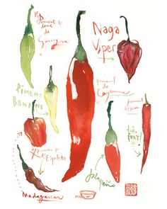 Pimiento rojo caliente decoración arte acuarela por lucileskitchen