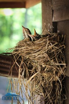 Beautiful Birds With Their Nests (10 Photos)