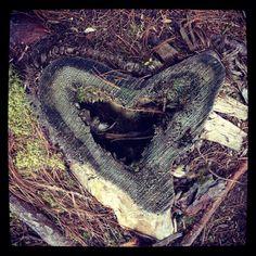 Emotive tree stump in #Acadia National Park. #DetailsDetails