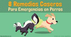 Es bueno tener estos 3 elementos a la mano para tratar problemas de salud en perros: lata de 100 % calabaza, povidona yodada, y peróxido de hidrógeno de 3%. http://mascotas.mercola.com/sitios/mascotas/archivo/2016/10/26/remedios-caseros-en-caso-de-emergencia-perro.aspx
