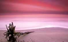 Pink Sand Beach   No viviendo en un mundo vivo: Pink Sands Beach. BEAUTIFUL!!! I LOVE Pink. Not sure where this is, but its pretty!!