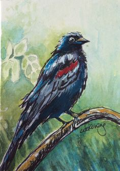 Original painting, this ACEO watercolour and ink illustration of a red-winged blackbird.    Title: Scarlet Feather    Size: 2.5 x 3.5 inches