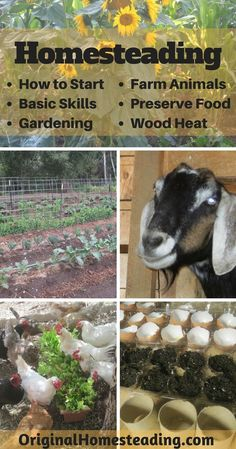 HOMESTEADING: How to Start+Basic Skills+Gardening+Farm Animals+Preserve Food+Wood Heat......Learn all about How to Create Your Own Homestead in a Modern World......become more Self-Reliant and Self-Sufficient while living a more Sustainable Lifestyle!