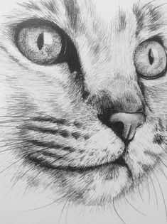 BRIGHT EYES We think that tattooing can be a method that's been used since enough time of the very first … Realistic Animal Drawings, Pencil Drawings Of Animals, Animal Sketches, Art Drawings Sketches, Drawings Of Cats, Pencil Drawing Pictures, Cat Eyes Drawing, Cat Sketch, Cat Sleeping