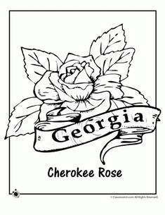 pennsylvania state flower coloring pages - photo#13