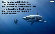 Das gefährlichste Tier der Welt. - this is the most dangerous animal on earth. Year after year it's responsible for killing millions of lifes. On the right side swims peacefully a shark.