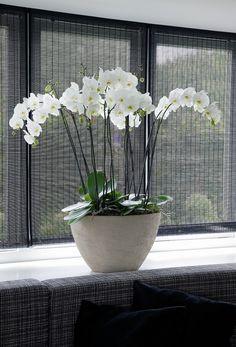 Witte orchidee in strak interieur.