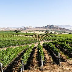 Find a little Wild West in Santa Barbara's wine country