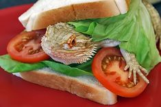 Community Post: 21 Reasons You Need To Start Hanging Out With Bearded Dragons Bearded Dragon Funny, Bearded Dragon Diet, Meal Worms, Pet Dragon, Guinea Pig Toys, Whats For Lunch, Types Of Vegetables, Exotic Fish, Different Recipes