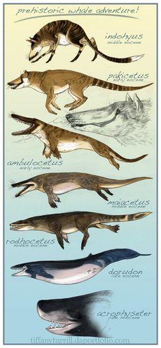 A evolução da baleia