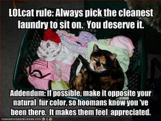 LOLcat rule: Always pick the cleanest laundry to sit on. You deserve it...