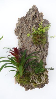 Jardim vertical em cortiça, Cork, vertical garden, plants, plantas