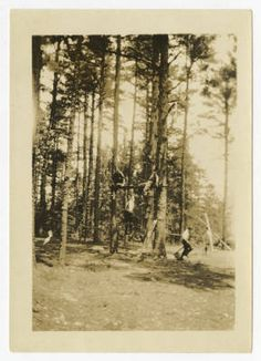 [Students in the Trees, 1920s] :: UNCG University Archives