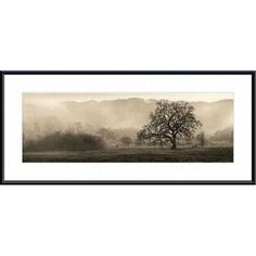 Found it at Wayfair - 'Meadow Oak Tree' by Alan Blaustein Framed Photographic Print