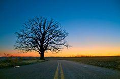 Big Tree, outside of my hometown Columbia, MO The Beautiful Country, Beautiful Places, Beautiful Pictures, Beautiful Scenery, Bike Trails, Biking, Columbia Missouri, Big Tree, Tree Leaves