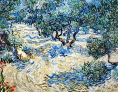 Vincent Van Gogh - Post Impressionism - Saint REMY - Champs d'oliviers.                                                                                                                                                                                 More