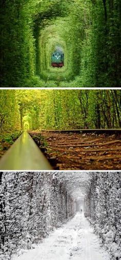 The Tunnel of Love is a beautiful spot in Klevan, Ukraine. A three kilometer railway section leads to the fibreboard factory. The train runs three times a day and delivers wood to the factory. However, the trees make a green corridor, which attracts many couples, as well as photographers, for its eye catching avenue.It is said that if you and your beloved come to the Tunnel of Love and sincerely make a wish, it will come true.