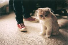 Squishy Nose Cat : Cats on Pinterest Grumpy Cat, Hamsters and Sleep