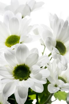 White Flowers Against White Background by David Watkins**