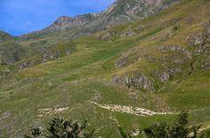 A l'approche de la cabane de Pouilh, nous apercevons le troupeau de moutons conduits par les bergers vers une zone où l'herbe sera plus verte.