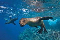 galapagos islands | Galapagos Islands Ecuador