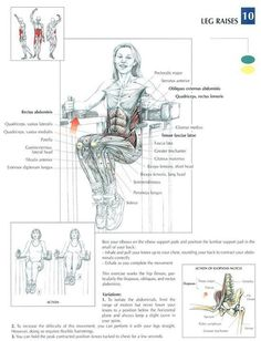 Leg Raises ♦ #health #fitness #exercises #diagrams #body #muscles #gym #bodybuilding #abs #abdomen
