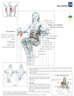 Leg Raises ♦ #health #fitness #exercises #diagrams #body #muscles #gym #bodybuilding #abs #abdomen